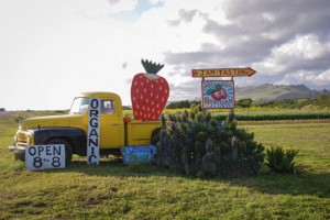Swantan Berry Farm