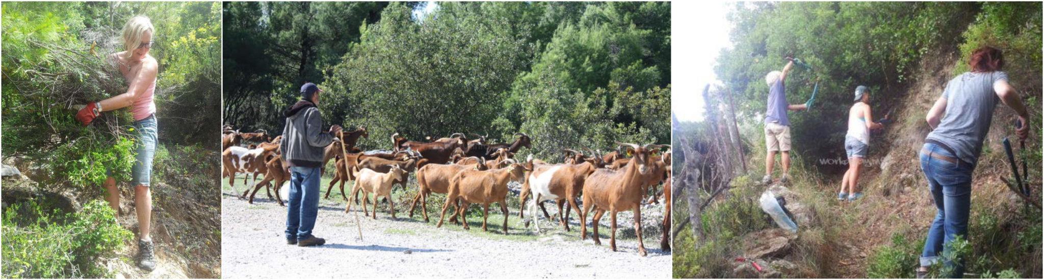 explore-islands-greece-Skopelos-nature